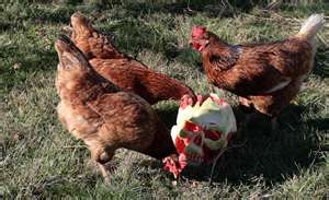 Zombie chickens3